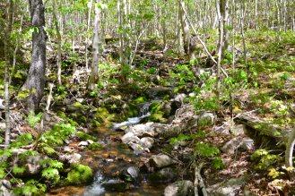 Cape Breton Highlands National Park | Photo © 2016 Mathieu Robert
